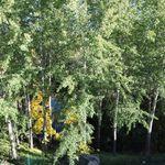2 huoneen asunto 63 m² kaupungissa Jyväskylä